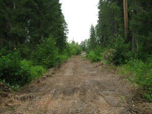 Сиверский лес