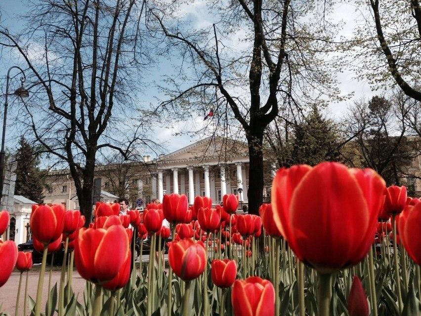 Смольный весна тюльпаны цветы