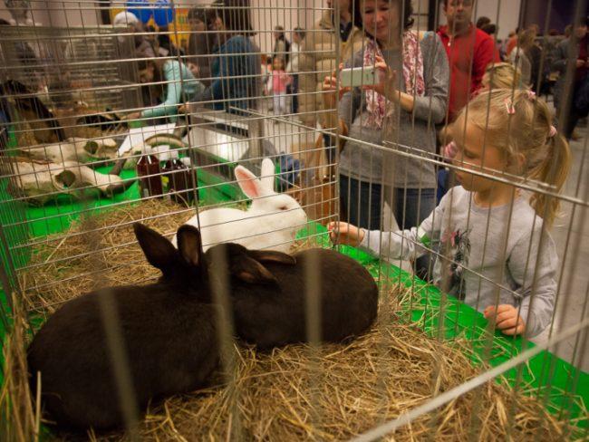 зоофорум зоосфера зоошоу выставка животных кролики