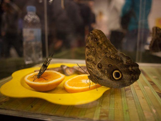 зоофорум зоосфера зоошоу бабочки