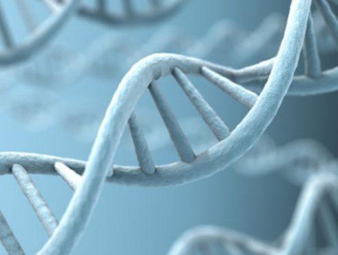 днк генетика