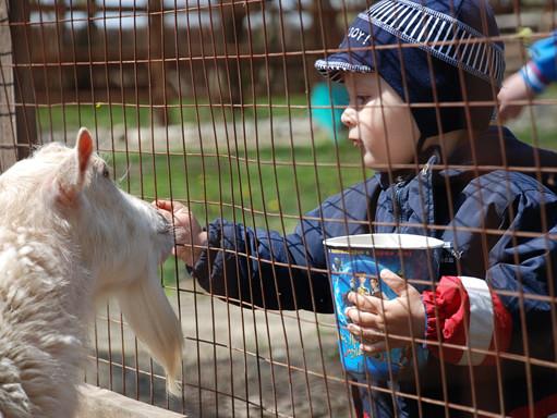 Калининградский зоопарк попал вТОП-10 наилучших в Российской Федерации