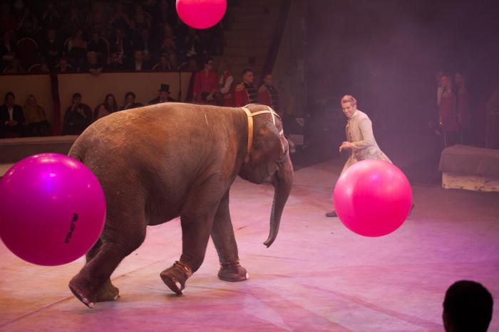 цирк чинизелли цирк на фонтанке слон