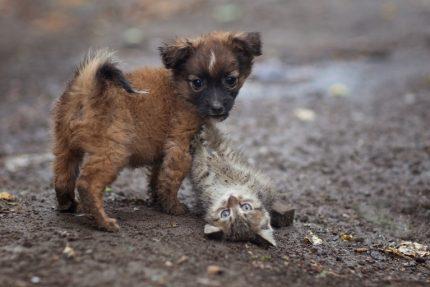 """Юрий Коротун, """"Дружбаны"""" щенок котенок собака"""
