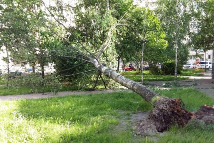дерево, лесоповал, упавшее дерево