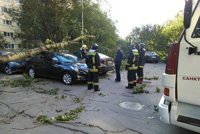 шторм упавшие деревья