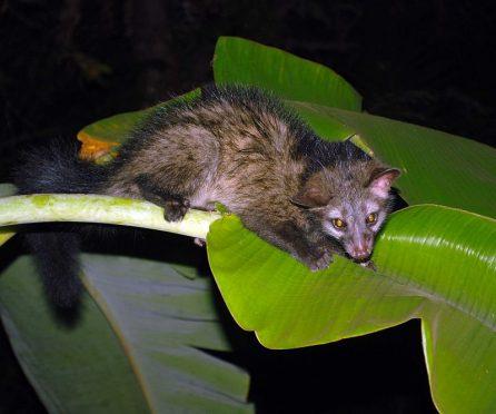 фото: Krishnakumarvairassery / wikipedia.org