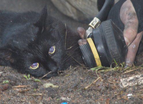 Вквартирном пожаре наТухачевского пожарные спасли кота— Петербург