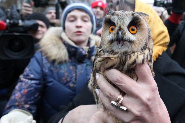 Хищники и экзотические животные в городе это тренд