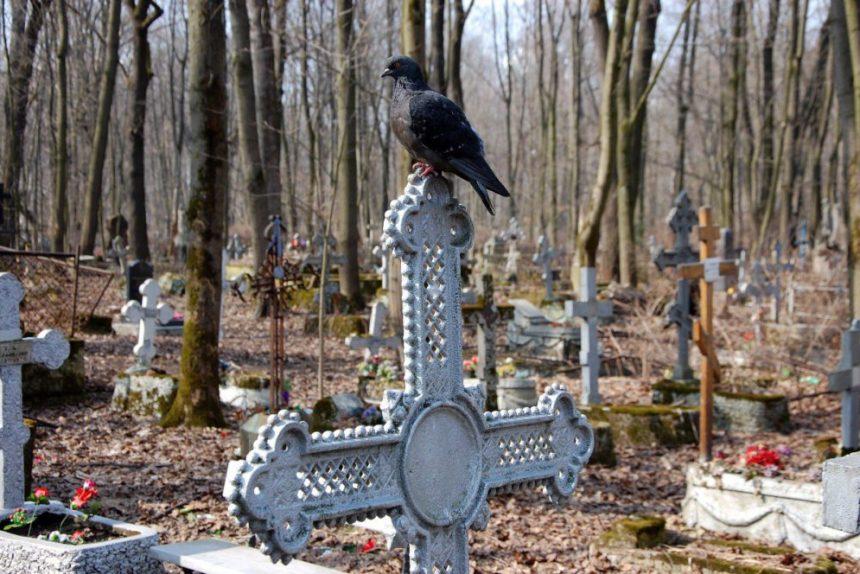 смоленское кладбище могила ворон