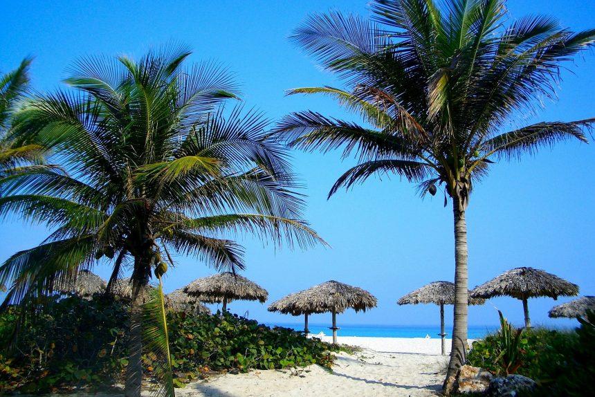 счастье пальмы пляж баунти