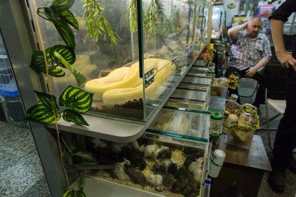полюстровский рынок змея удав питон