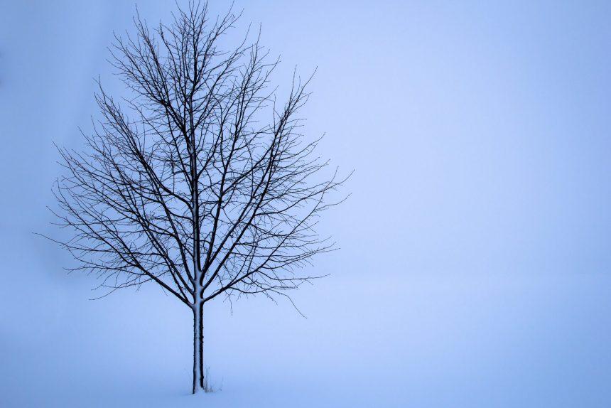 дерево депрессия тлен одиночество