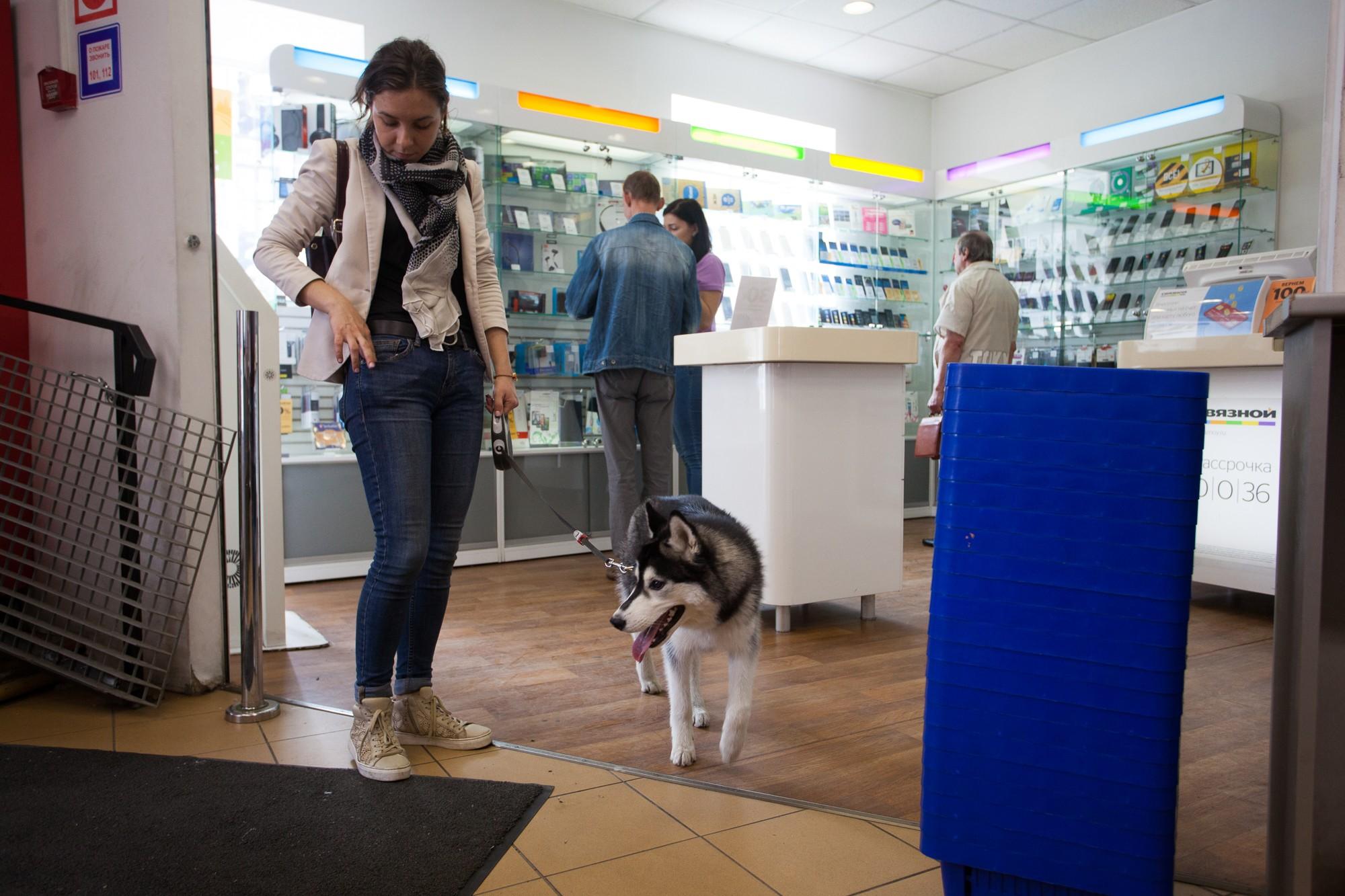 ксюша и хаски собака евросеть салон сотовой связи