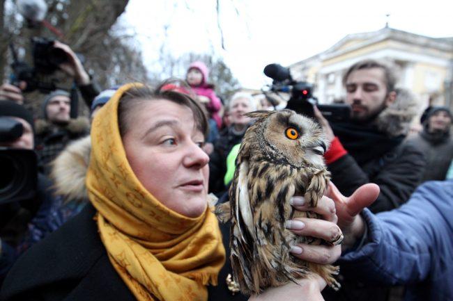 62-25.03.2017 - Анастасия Мельникова выпускает ушастую сову в парке Сергиевка