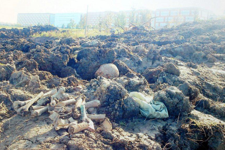вандализм строительство братская могила советских солдат Пулково кости останки черепа