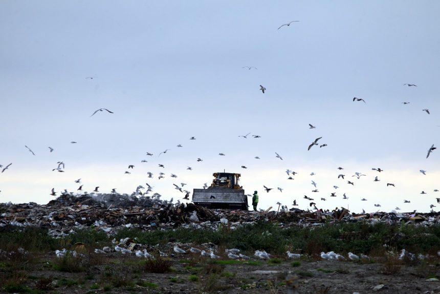 полигон ТКО Новоселки мусор отходы экология бульдозер птицы