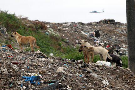 полигон ТКО Новоселки мусор отходы экология бродячие собаки