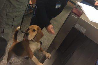 собака метро