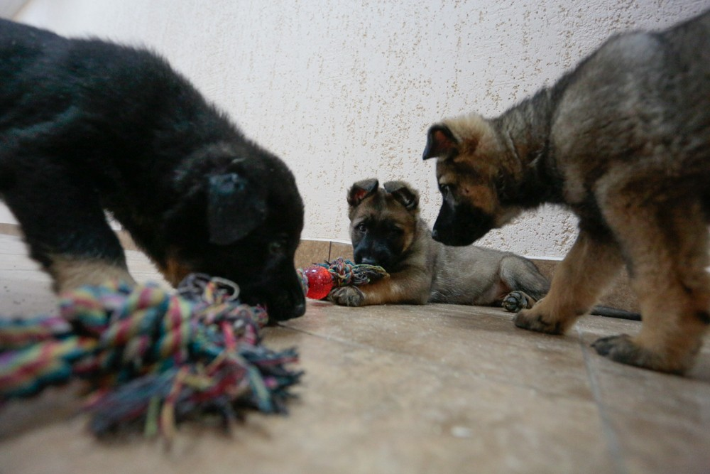 кинологи собаки