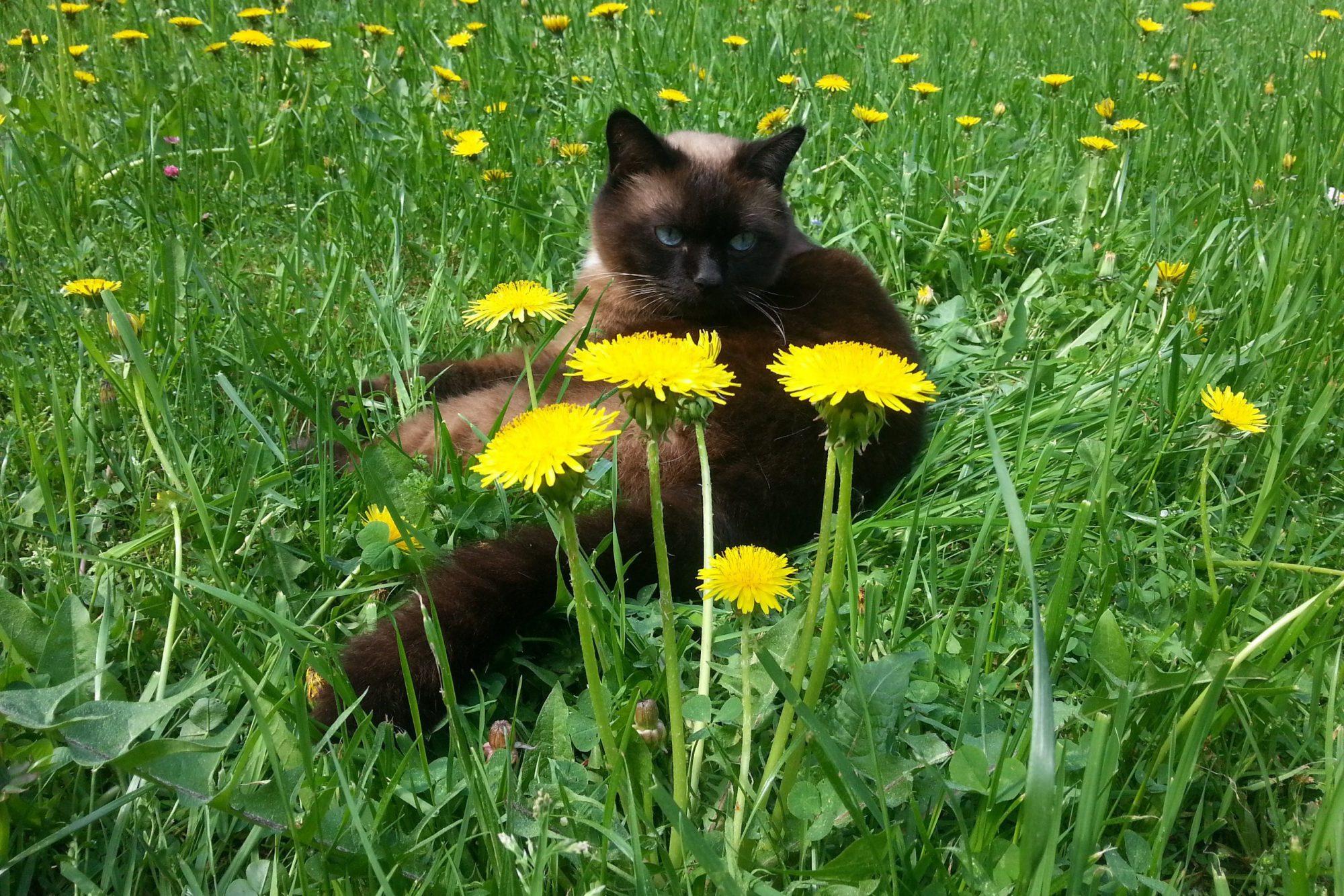кошка кот