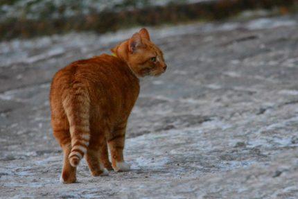 кот, филимон, выборгский замок