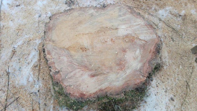 пень вырубка деревьев