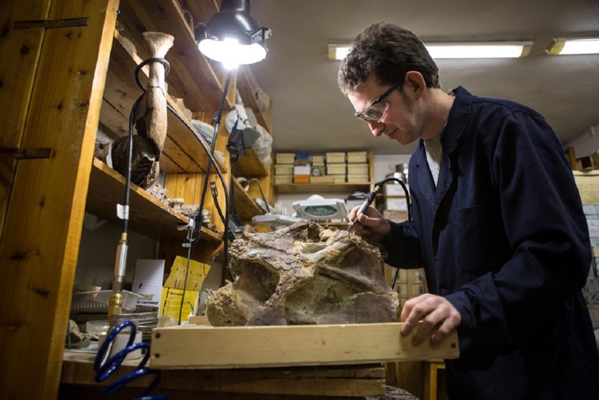 кость динозавра сибиротитан ископаемое палеонтология окаменелость учёный