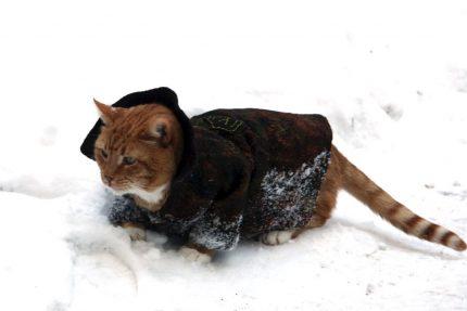кот, филимон, выборгский замок, пальто