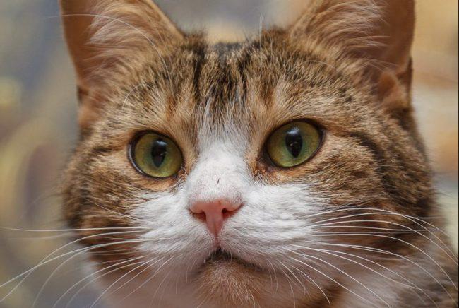 Мару_2 кот кошка