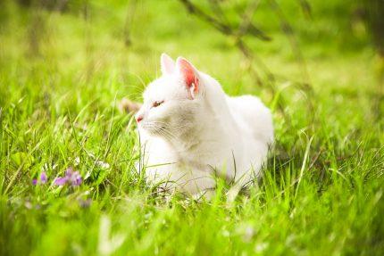 кот, кошка, весна