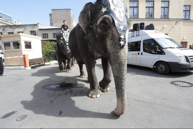 слон парад слонов цирк день города