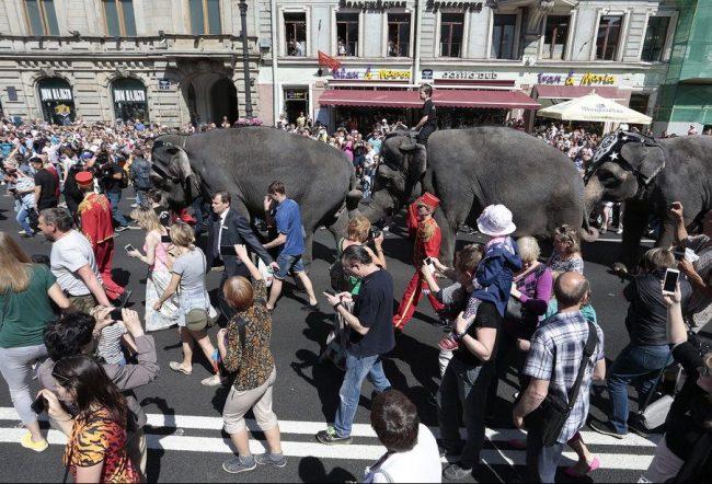слоны парад слонов невский проспект день города