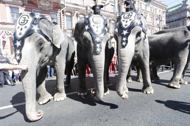 слоны парад слонов цирк день города