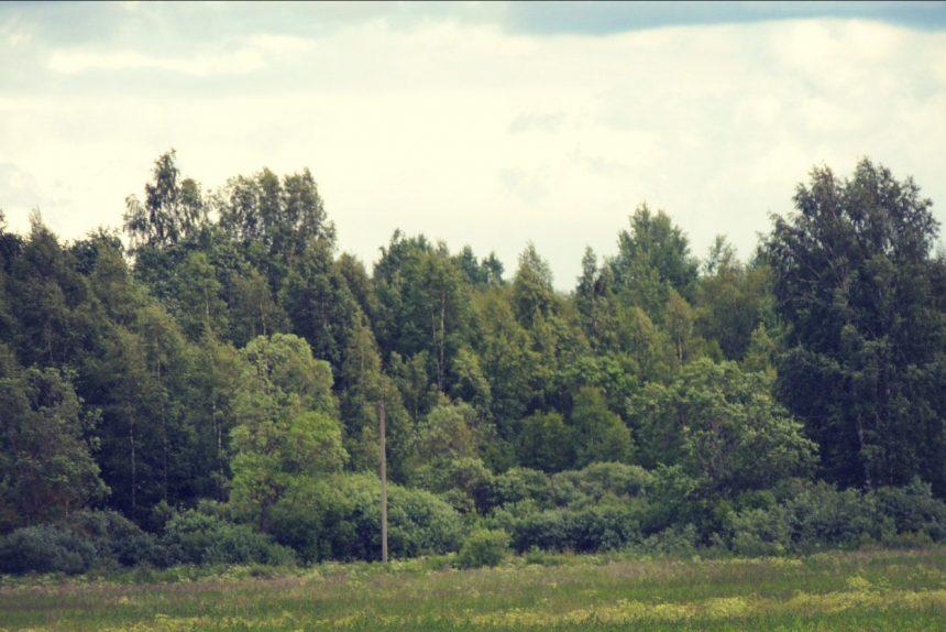 Старогатчинский лес