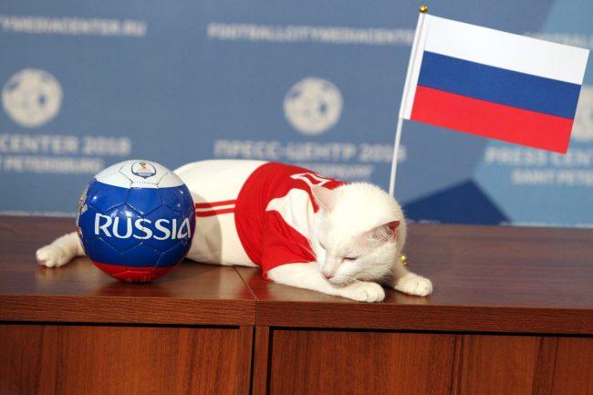 кот Ахилл Российский флаг предсказание результата ЧМ-2018