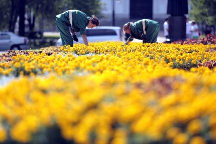 сквер Магазейная улица Пушкин зелёная зона цветы посадки благоустройство