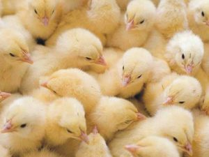 фото с сайта agrotorg.net