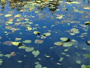 пруд, река, озеро, болото, вода, утопленник, утопающий