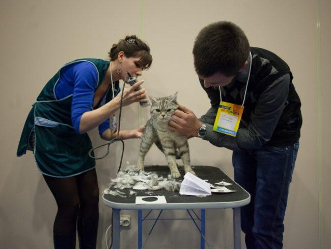 груминг кошек кошки кот зоосфера