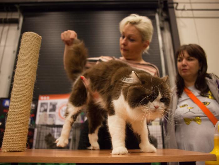 зоофорум зоосфера зоошоу выставка кошек кот кошка
