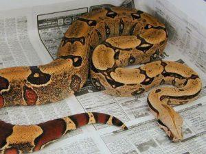 удав змея