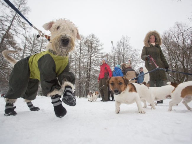 защитим удельный парк митинг собаки собачники догхантеры