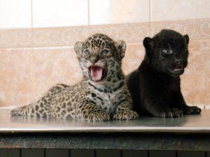фото Ленинградского зоопарка