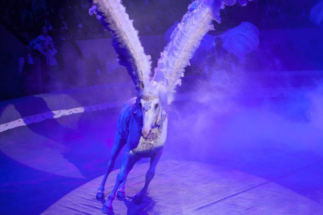 цирк чинизелли цирк на фонтанке пегас