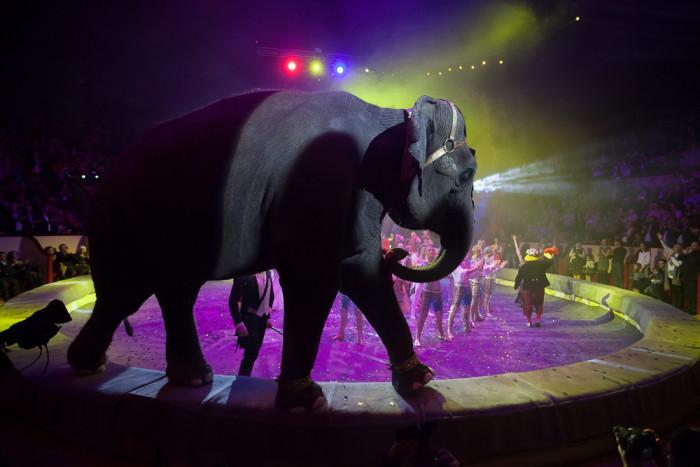 «Проблема в людях»: почему российский цирк не отказывается от использования животных?