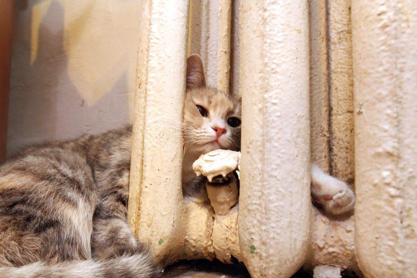 кошка батарея отопление теплоснабжение коммунальные услуги кот ЖКХ ЖКУ