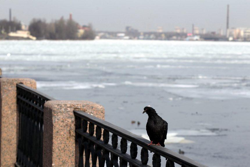 Такой разный март в фотографиях петербуржцев: солнце, снег, балет и кот-следопыт