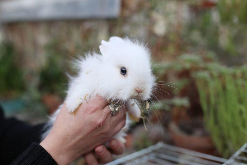 кролик, ботанический сад СПбГУ
