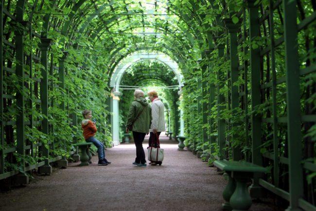 летний сад  галереи гуляющие люди прогулка дети